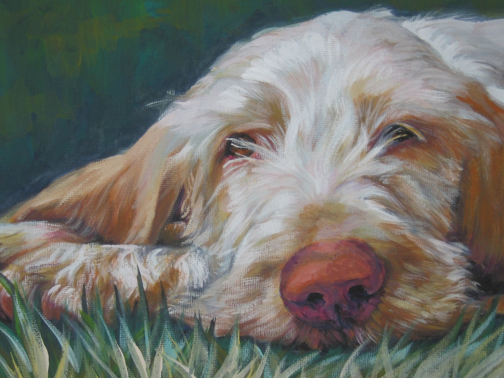 Spinone Italiano,Italian Pointer,coat,broken coat,grooming,wirehaired,dog,purebred,