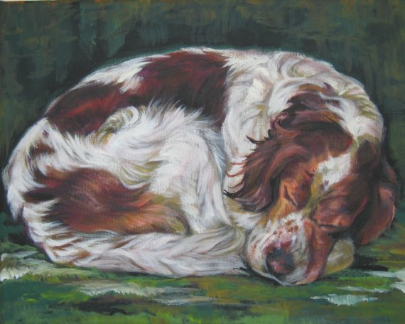 Irish Setter,Irish Red and White Setter,purebred dogs, irish,setter,dogs