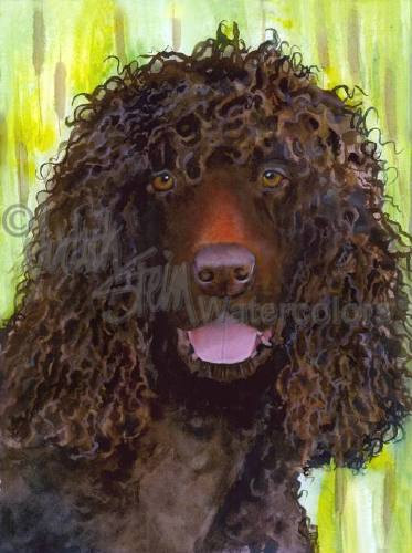 Irish Water Spaniel,Bogdog,Clown,dogs,purebred dog,Irish,water dog,spaniel