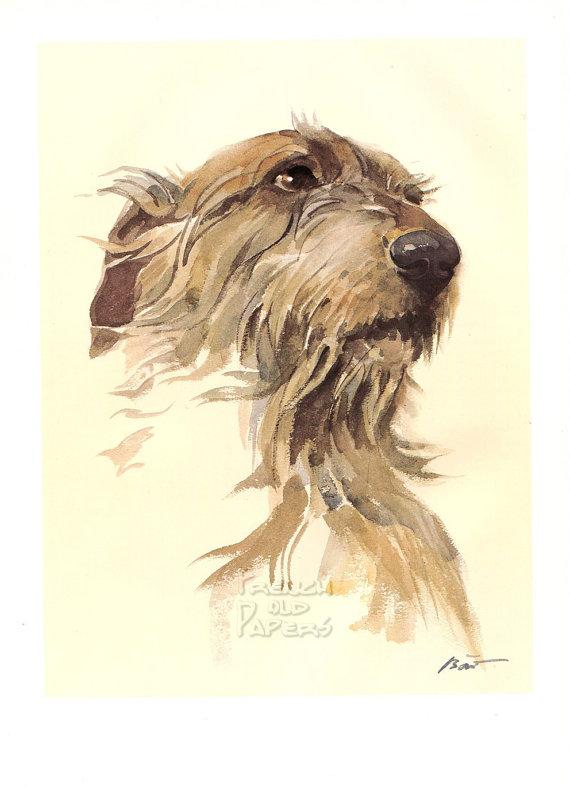 irish wolfhound,big dog of ireland,ireland,irish,hound,dog,purebred dog