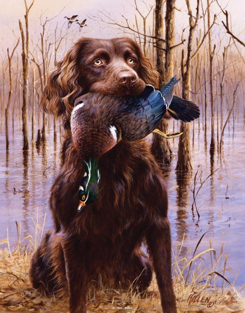Boykin Spaniel,Little Brown Dog,dogs,purebred dog,spaniel,James Spencer,Wateree River,dogs,purebred dog