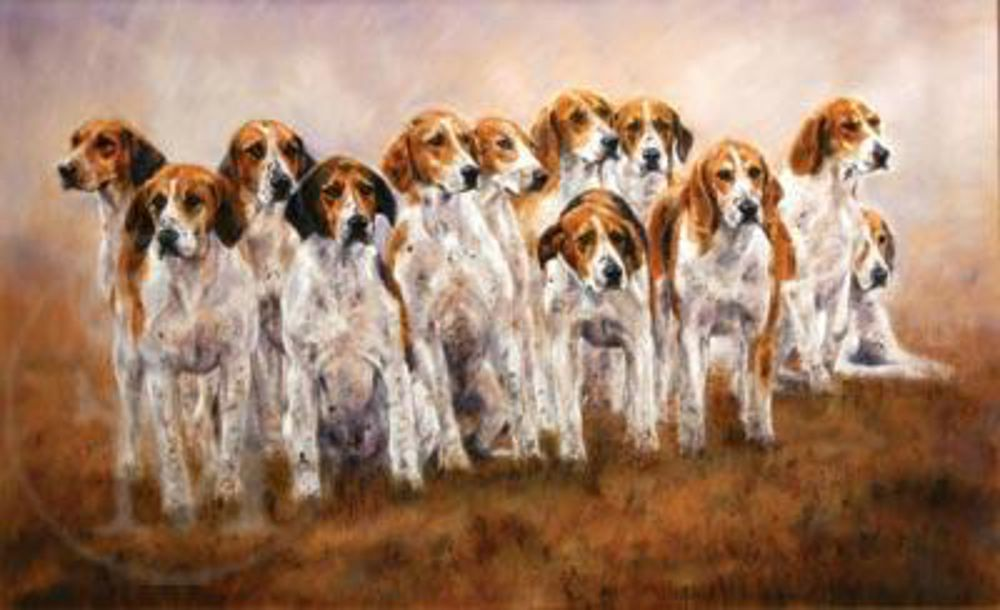 American Foxhound,Brooke Hounds,hounds,dogs,purebred dogs,De La Brooke Manor,fox hunt,