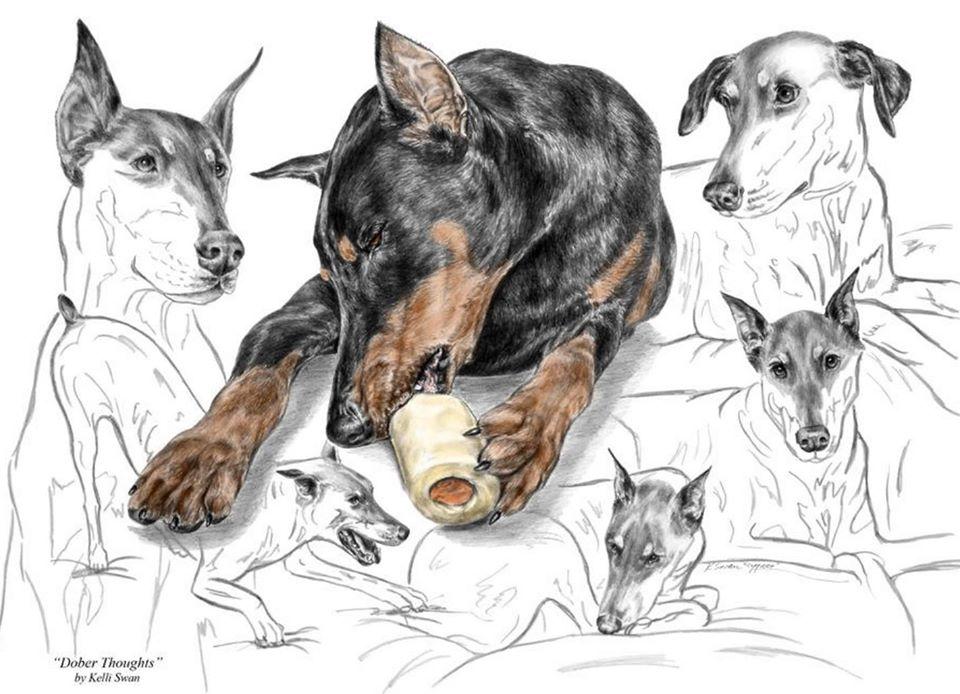 Doberman Pinscher,Dog,German Pinscher,German Short Haired Pointer,Great Dane,Manchester Terrier,Purebred Dog,Rottweiler