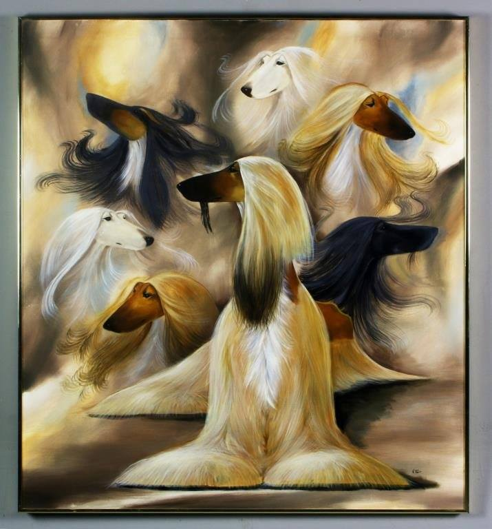 Afghan Hound,hair,coat,dogs,purebred dogs,monkey whiskers,Mandarin