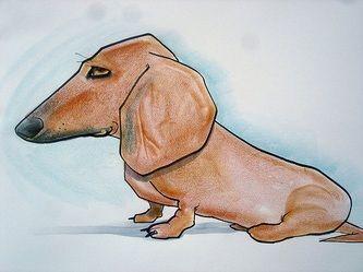 X dachshundX dogsX purebred dog
