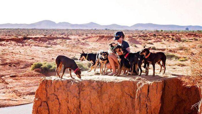 Aticia Grey,australian, Dogs, Kelpie,Purebred Dog,walk about