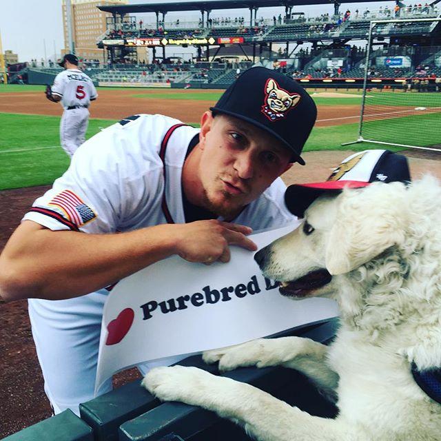 Kuvasz,Alex Dickerson,Chihuahua,El Paso Chihuahuas,purebred dog,dog