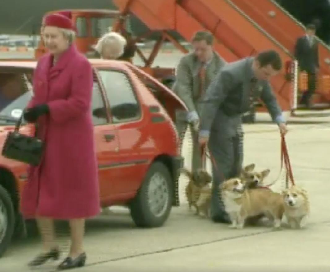 queen elizabeth,corgi,Pembroke Welsh Corgi,dogs,purebred dogs,birthday