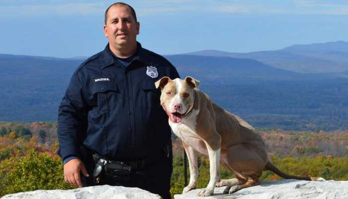 Pit Bull Terrier,police dog,dogs,purebred dog,bully,