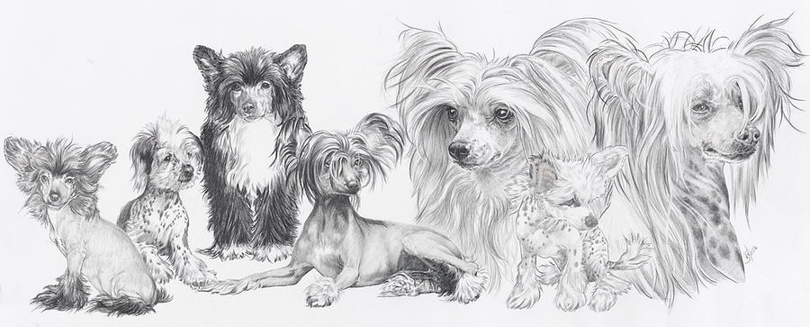 smut,Chinese Crested Hairless,dogs,purebred dogs