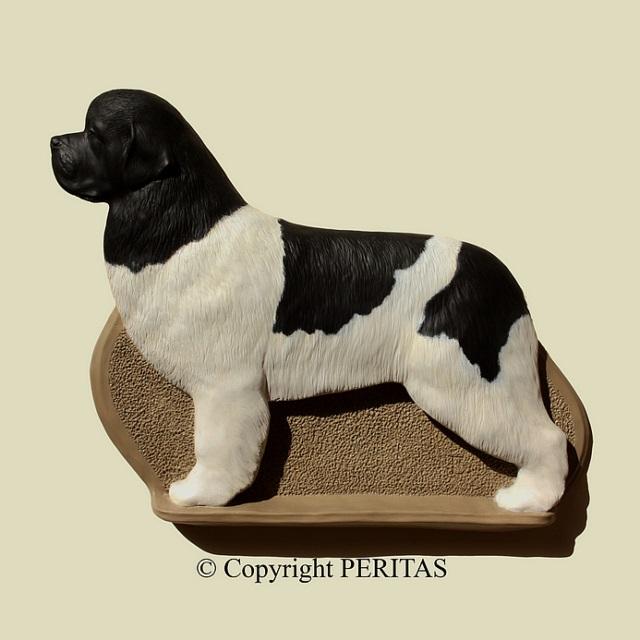 Landseer,Newfoundland,dog,purebred dog,Fédération Cynologique Internationale,AKC,Kennel Club,coat,color