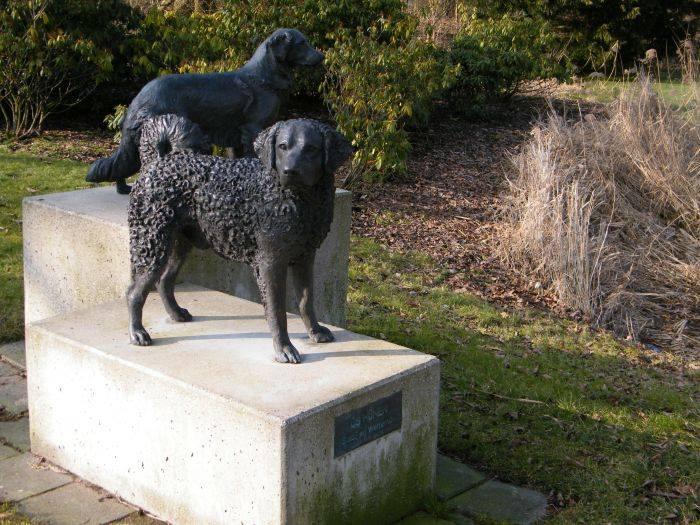 Wetterhoun,Stabyhoun,purebred dog,