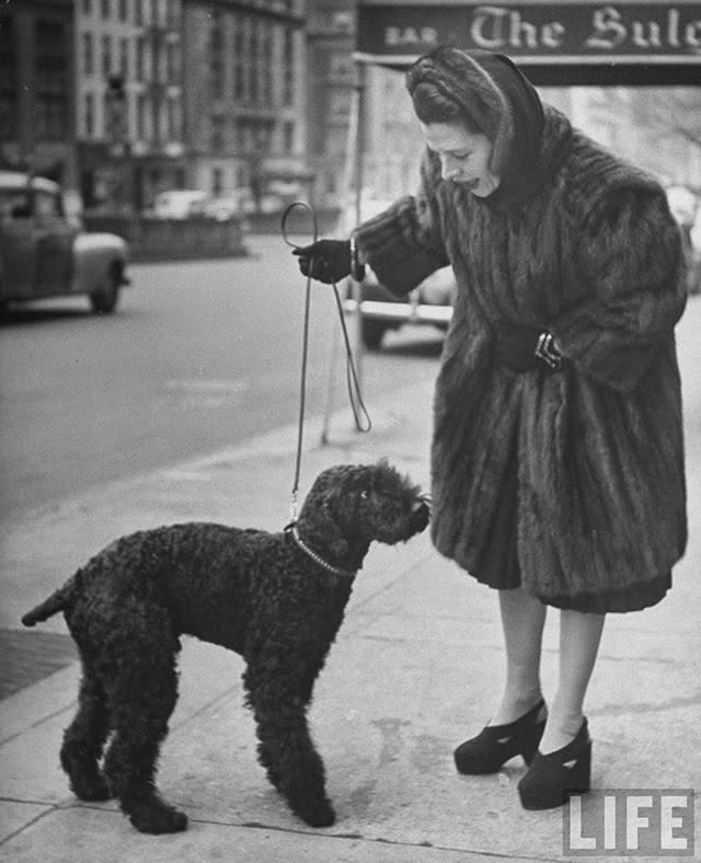 Ruth Gordon,Poodle,purebred dog