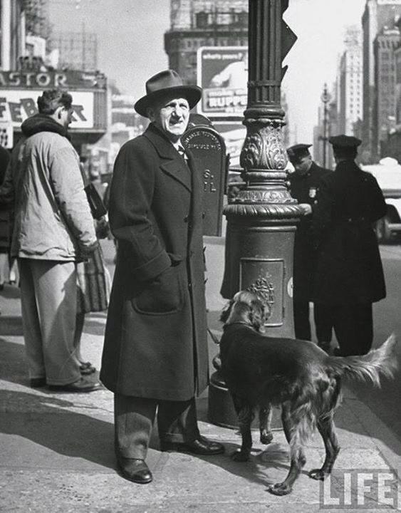 Irish Setter,Jimmy Durante,purebred dog,