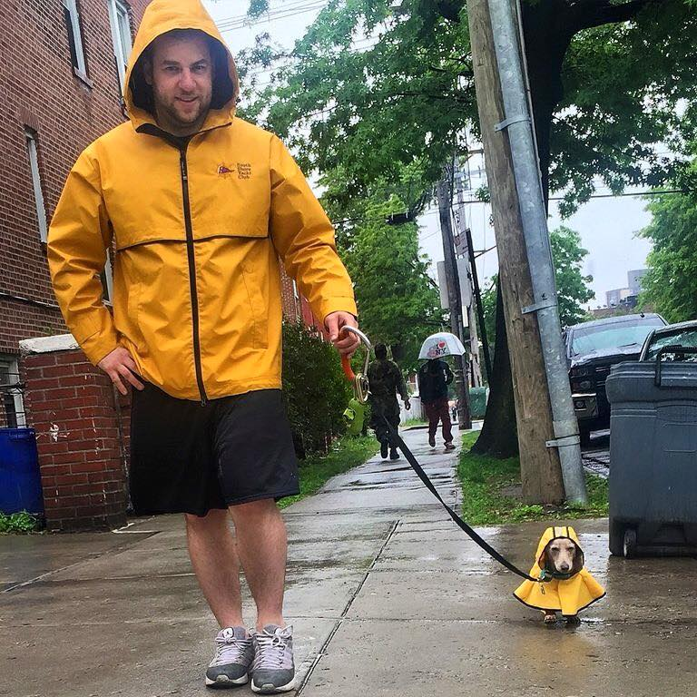 dachshund,purebred dog