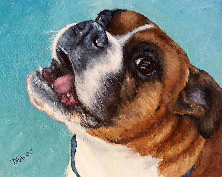 Boxer,dogs,purebred dogs