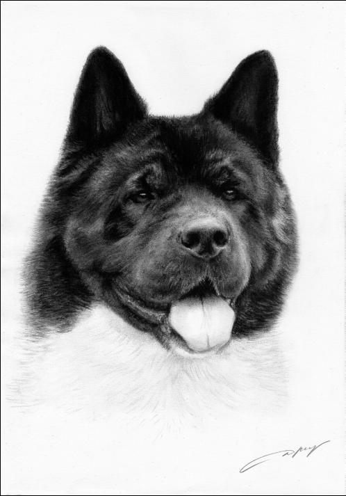 Akita,Myth,legend,purebred dog