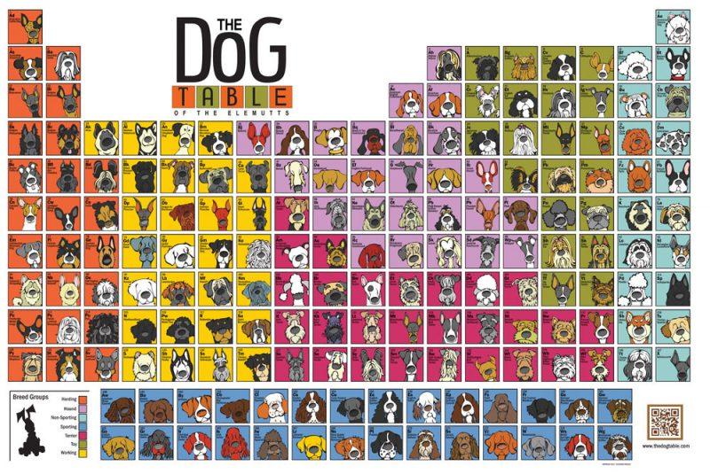 The periodic dog table dog posterpurebred dogs urtaz Choice Image