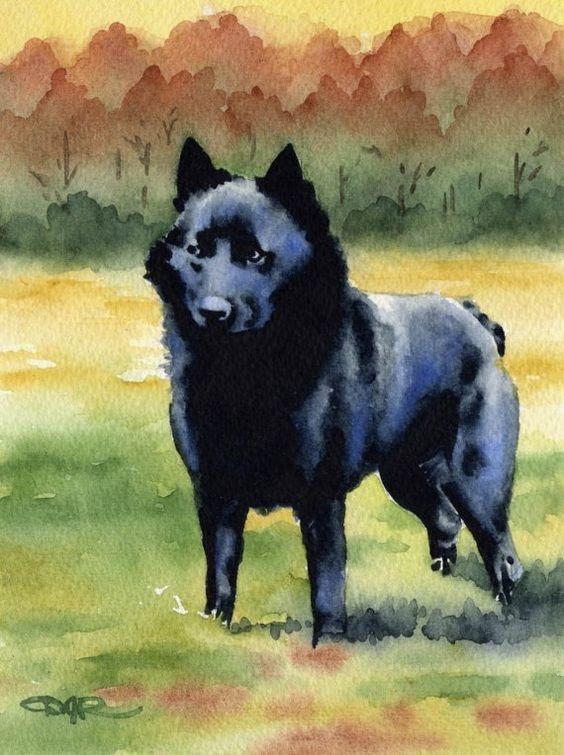 Leauvenaar,Groenendael,Schipperke,Belgian Sheepdog,purebred dog,dogs,name,history