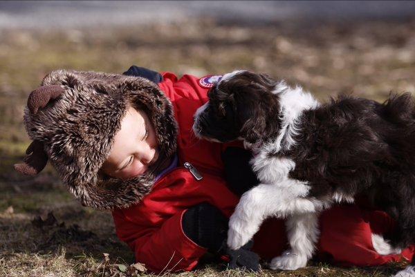 Portuguese Water Dog, Justin Trudeau,dog,purebred dog,Canada,