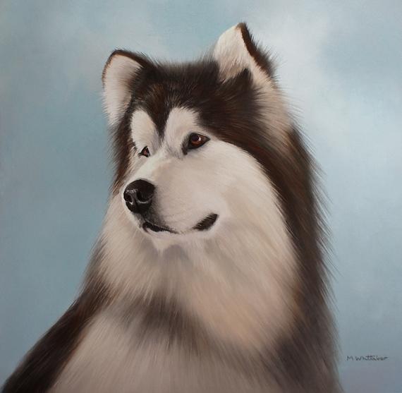 Alaskan Malamute,eye,structure,orbital muscle,dog,purebred dog