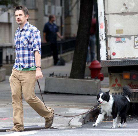 National Dog Day Freebies
