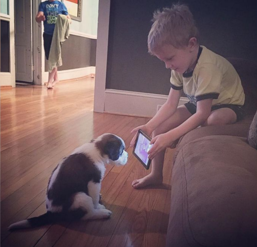St. Bernard,puppy,viral photo,purebred dog