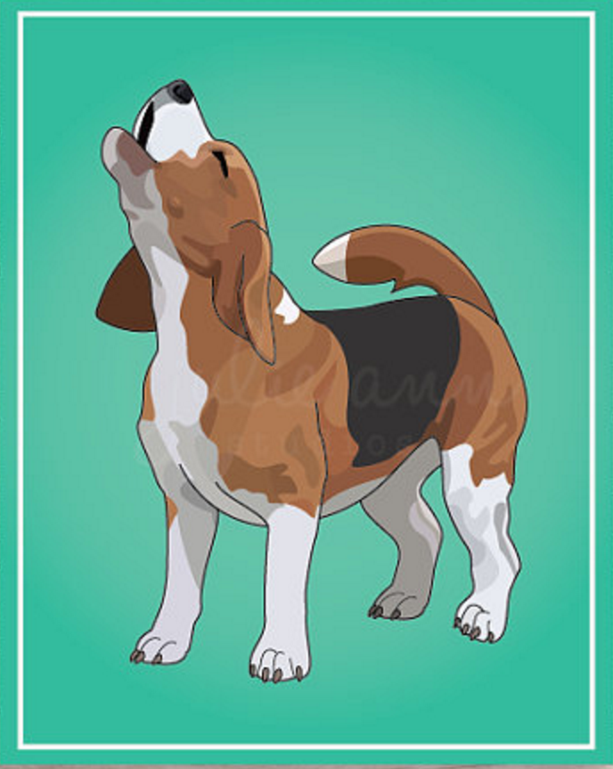 Beagle,baying,hound,purebred dog