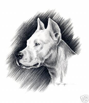 Dogo Argentino,Boxer,Great Dane,Great Pyrenees,Pointer,Irish Wolfhound,Dogue de Bordeaux,Bulldog,Spanish Mastiff,Bull Terrier,Fighting Dog of Cordoba,dog,purebred dog,Antonio and Augustin Nores-Martinez,nickname
