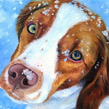 Brittany,pointer,hunting dog,spaniel,dogs,purebred dog
