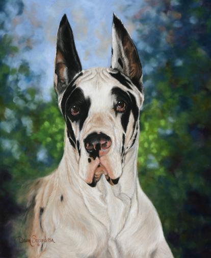 Great Dane,Beauceron,harlequin,color,dogs,purebred dog,