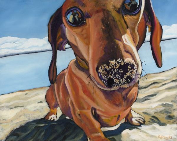 Dachshund,Basset Hound,dogs,earthdog,go to ground, AKC,dogs
