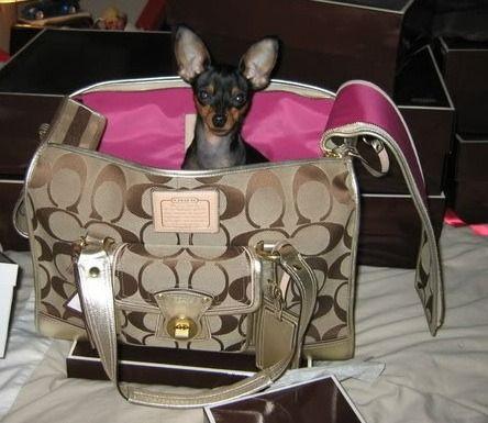 Bonnie Cashin,Dog Leash Skirt,dogs.purebred dog,Coach