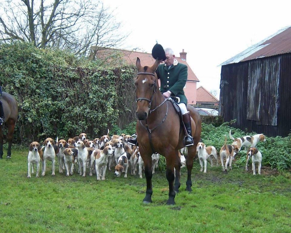 Harrier,Fox hunt,hound,purebred dog, dog,hunt packs,Dunston Harriers