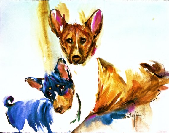 Basenji,wild dog,dogs of the Villagers,jumping up and down dogs,bark less,purebred dog,dogs