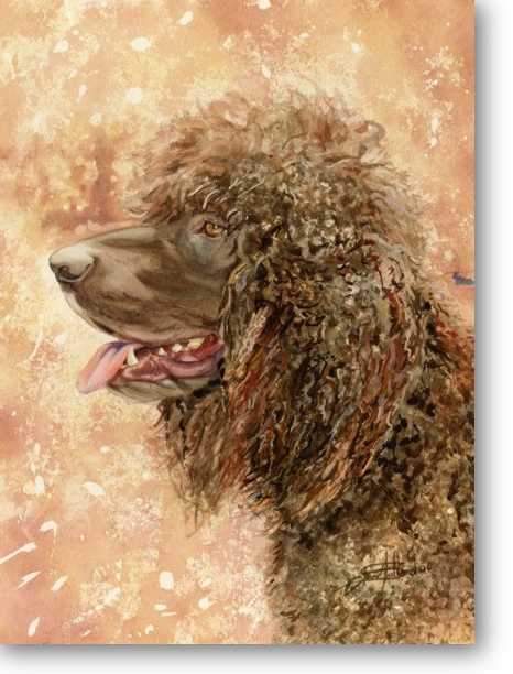 Leprechaun,Irish Water Spaniel,purebred dog,myth,legend