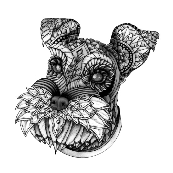 Miniature Schnauzer,Australian Terrier,dog,purebred dog, terrier
