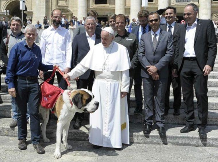 St Bernard,Barry Foundation,Pope Francis,purebred dog