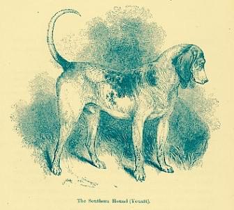 Southern Hound,dog,purebred dog,Foxhound, Bloodhound,Beagle,Harrier,Coonhound