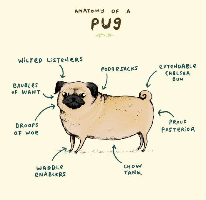 Dogs,Margo Kaufman,Pug,pugs,Purebred Dog