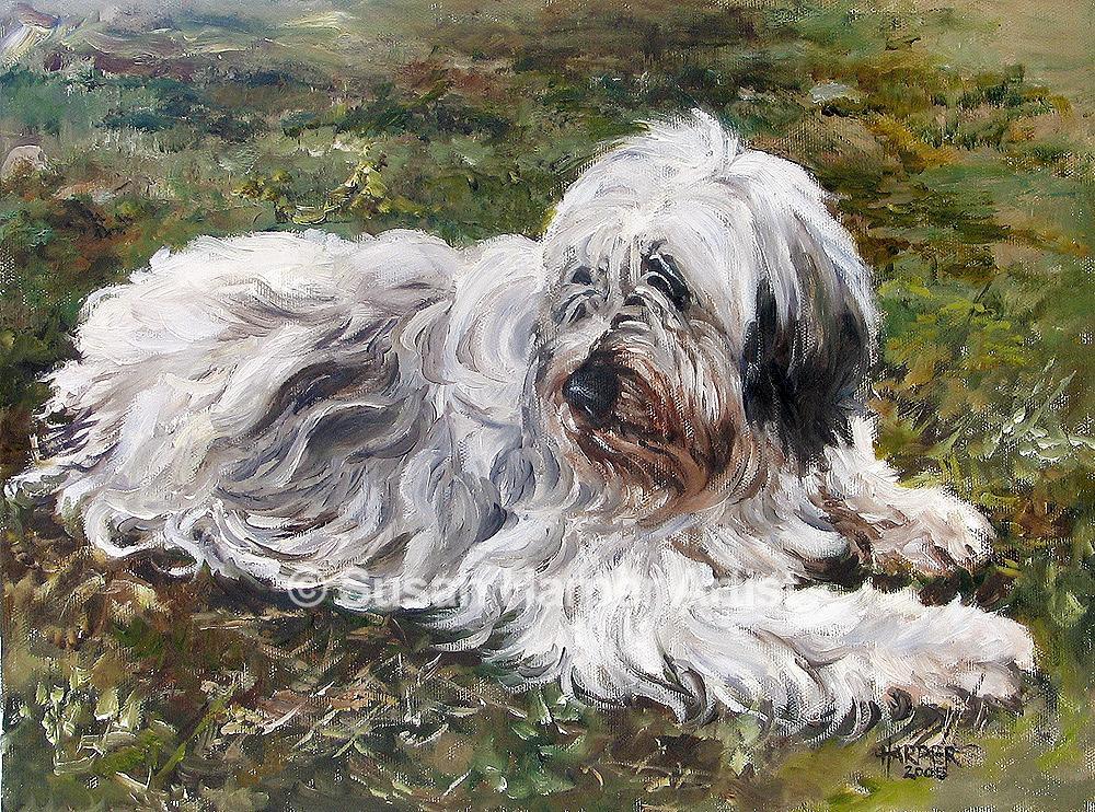 Polish Lowland Sheepdog,PONS,humor,purebred dog,sheepdog,Polski Owczarek Nizinny