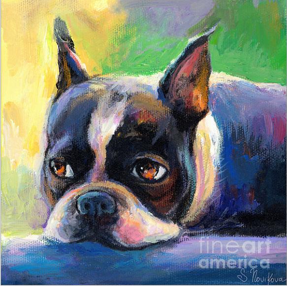 Boston Terrier,color,brindle,coat