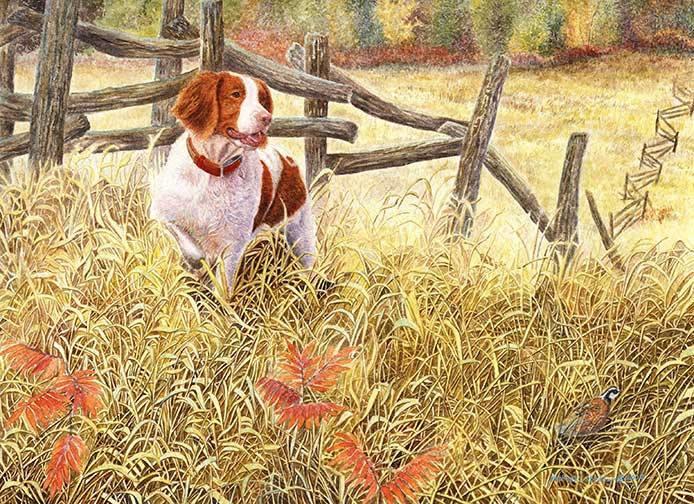 Brittany,Dual Champion, hunting dog,