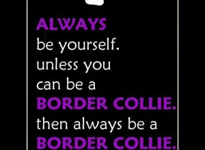For our Border Collie Friends…….