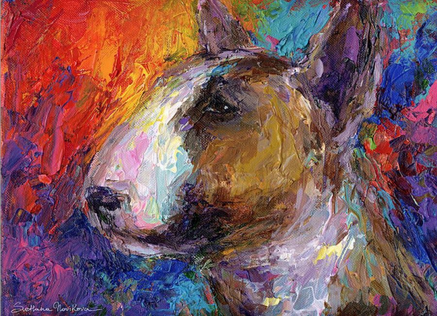 Bull Terrier,eyes,structure
