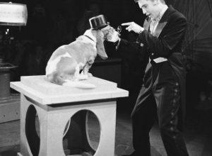 Sherlock, the Basset Hound with Elvis