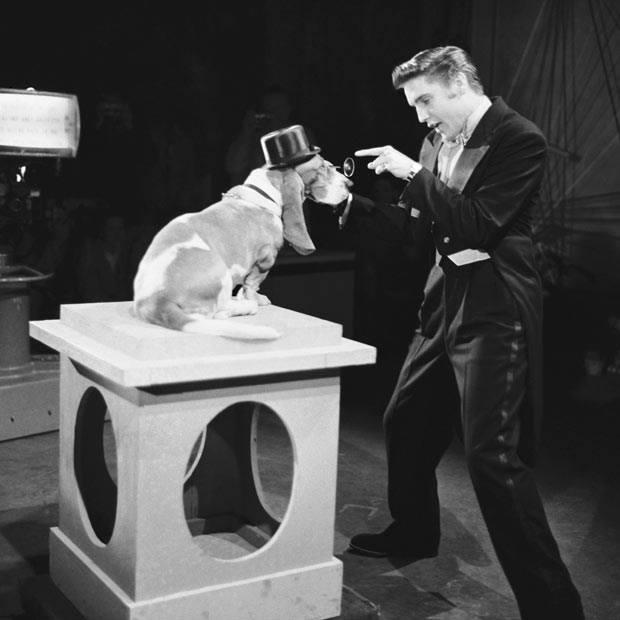 """Elvis Presley,basset hound,hound,hound dog,Willie Mae """"Big Mama"""" Thornton,Steve Allen Show"""