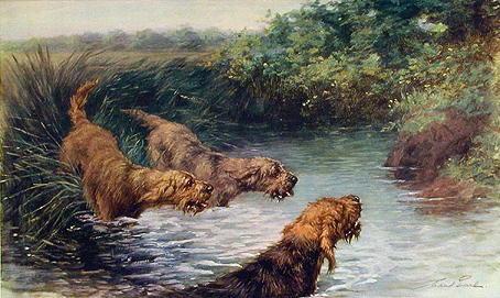 Otterhound,terrier,otter,hunting