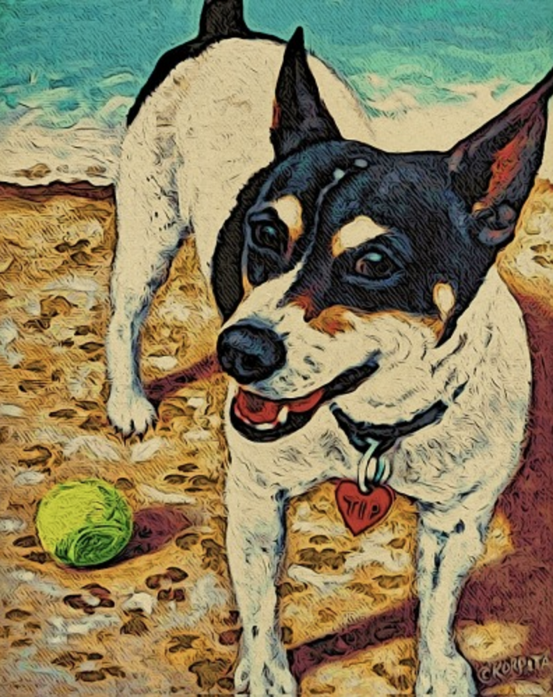 Rat Terrier,Fox Terrier,Manchester Terrier, Bull Terrier and Old English White Terrier,Italian Greyhound,Beagle,Whippet