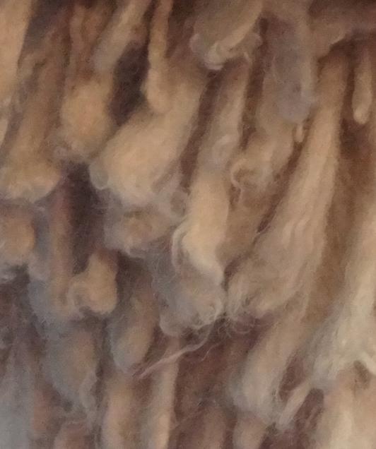 Spanish Water Dog,corded coat, hair,coat